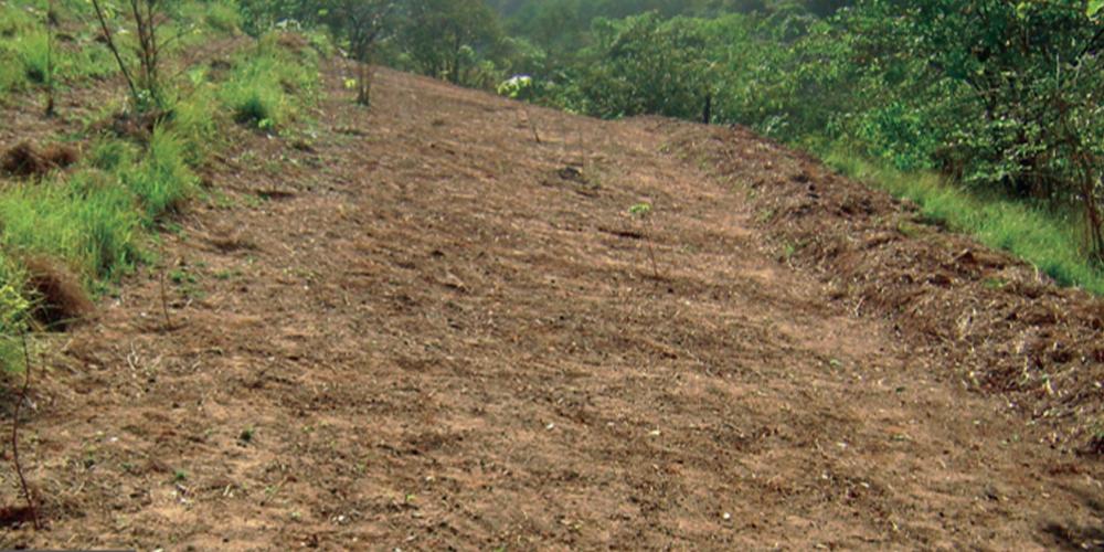 servicos-reflorestamento-criacao-aceiros