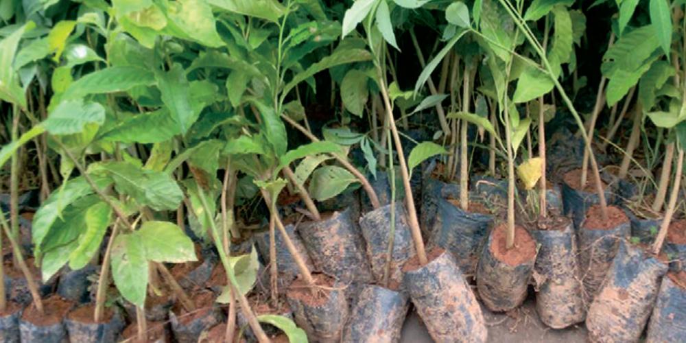 servicos-reflorestamento-fornecimento-mudas