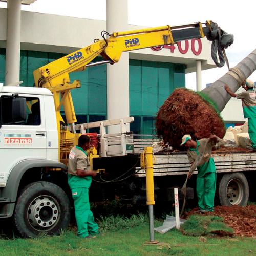 transporte-arvores-palmeiras