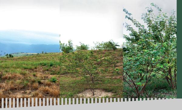imagem-servicos-reflorestamento-indice