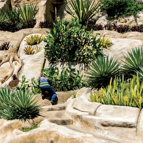rock-garden