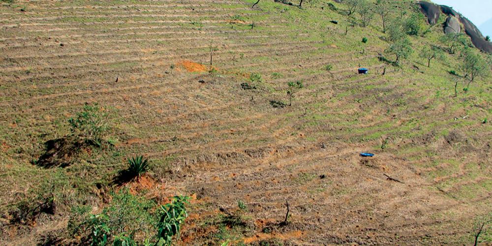 servicos-reflorestamento-covas-nivel