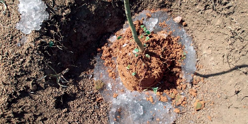 servicos-reflorestamento-hidrogel-plantio