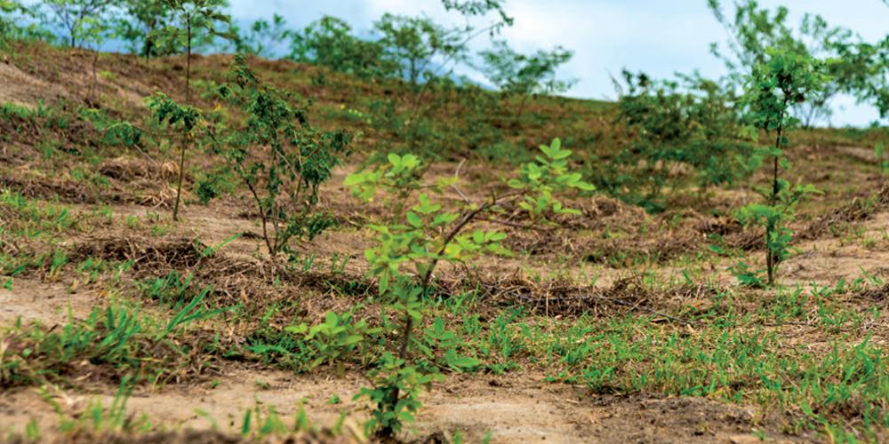 servicos-reflorestamento-plantio-mudas